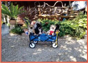 several cute dogs in pull-along cart in garden resort