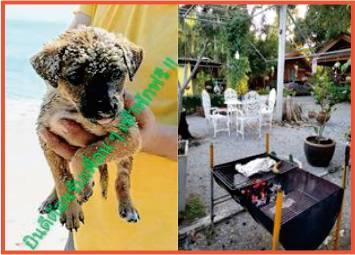 cute sandy puppy and bbq in garden resort