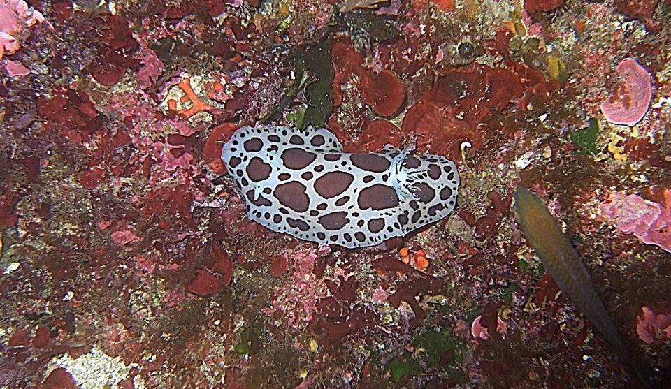 inland sea malta spotteddolly